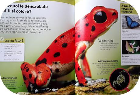 Questions/réponses: L'encyclopédie des animaux- Editions NATHAN