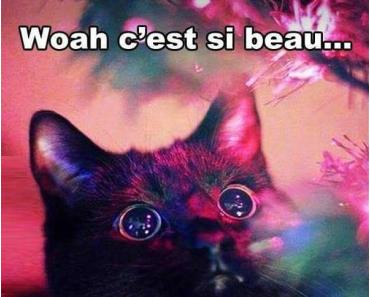 [Blabla]Christmas is coming : Idées cadeaux Livresques pour les « Cats addict »