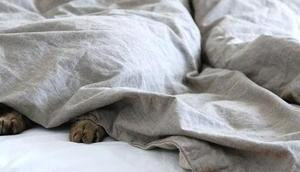 l'oreiller avec... fille dans bois