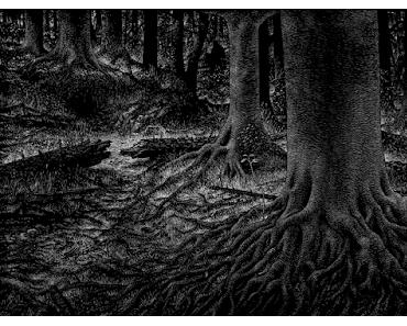 """La réconfortante """"Forêt"""" de Thomas Ott"""